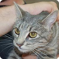 Adopt A Pet :: Kathryn - Brooklyn, NY