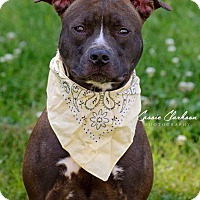 Adopt A Pet :: Kiva - ADOPTED! - Zanesville, OH