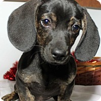 Adopt A Pet :: Rex - Erwin, TN