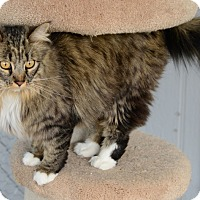 Adopt A Pet :: Destiny - Gardnerville, NV