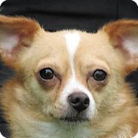 Adopt A Pet :: Lucky - Germantown, MD