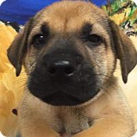Adopt A Pet :: Franklin - Ft. Lauderdale, FL