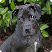 Adopt A Pet :: LUNA - West Palm Beach, FL