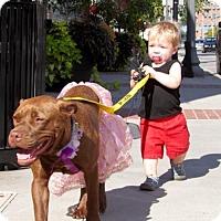 Adopt A Pet :: Firefly - Charlotte, NC