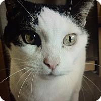Adopt A Pet :: Samantha - Chula Vista, CA