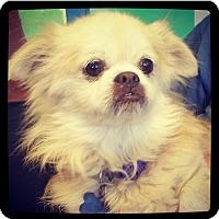 Adopt A Pet :: Freddie - Grand Bay, AL