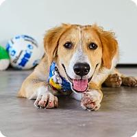 Adopt A Pet :: Rio - Nanaimo, BC