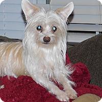 Adopt A Pet :: Lacy - Conesus, NY
