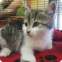 Adopt A Pet :: ELIZA - Urbana, IL