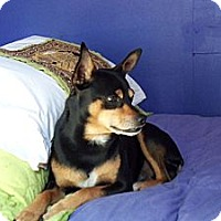 Adopt A Pet :: Merlin - Gig Harbor, WA