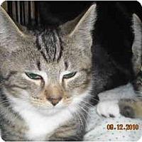 Adopt A Pet :: Clarke - Riverside, RI