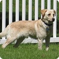 Adopt A Pet :: Gina - Cheshire, CT