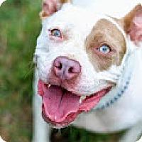 Adopt A Pet :: Patty - Tinton Falls, NJ