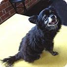 Adopt A Pet :: INKY