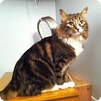 Adopt A Pet :: Oscar - Vancouver, BC