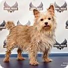 Adopt A Pet :: Dezi