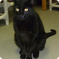Adopt A Pet :: Fidget - Hamburg, NY