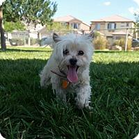 Adopt A Pet :: Suzie - Las Vegas, NV