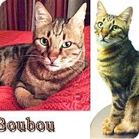 Adopt A Pet :: BOUBOU - Marion, CT