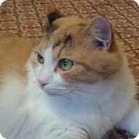Adopt A Pet :: Sheila - Irwin, PA