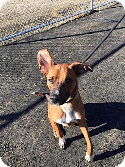 German Shepherd Dog Mix Dog for adoption in Newfield, New Jersey - Tiggs