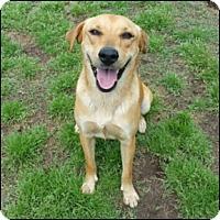 Golden Retriever Mix Dog for adoption in Shreveport, Louisiana - Happy