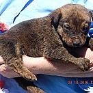 Adopt A Pet :: Nugget (6 lb)