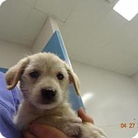 Adopt A Pet :: Rivers - Gulfport, MS