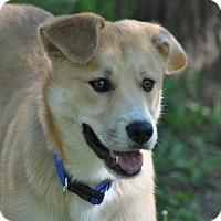 Adopt A Pet :: Keanu - Crocker, MO