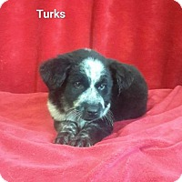 Adopt A Pet :: Turks - Chester, IL