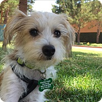 Adopt A Pet :: Ralph - Thousand Oaks, CA