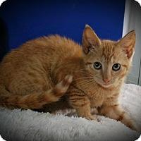 Adopt A Pet :: Adalaide - Fairborn, OH