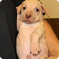 Adopt A Pet :: Cubby - Union, CT