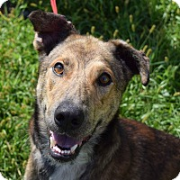 Adopt A Pet :: Buddy Collins - Lisbon, OH
