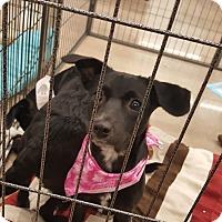 Adopt A Pet :: Rhea - Mesa, AZ