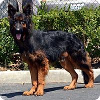 Adopt A Pet :: Patron - Mira Loma, CA