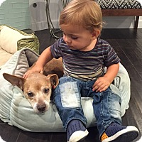 Adopt A Pet :: Myrtle LOVES kids! - Los Angeles, CA