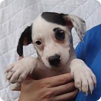 Adopt A Pet :: Winter - Oviedo, FL