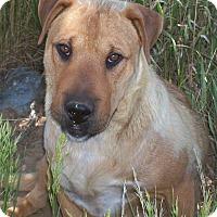 Adopt A Pet :: Momma - Questa, NM