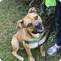 Adopt A Pet :: Jethro - Houston, TX