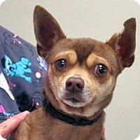 Adopt A Pet :: Rusty - Wildomar, CA