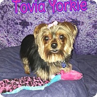 Adopt A Pet :: Tovia - Wellington, FL