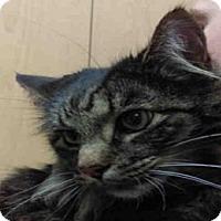 Adopt A Pet :: BUBBA - Missoula, MT