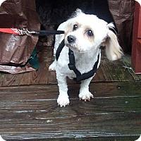 Adopt A Pet :: Manurva - Alden, NY
