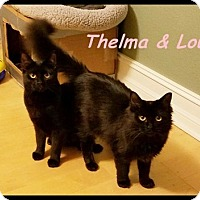 Adopt A Pet :: Thelmas & Louise - Brandon, FL