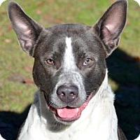 Adopt A Pet :: Bue - Ridgeland, SC