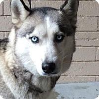 Adopt A Pet :: I1267011 - Pomona, CA