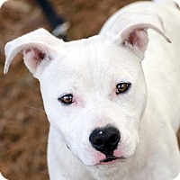 Adopt A Pet :: Corbin - Athens, GA