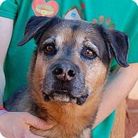 German Shepherd Dog Mix Dog for adoption in Las Vegas, Nevada - Tonga
