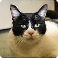 Adopt A Pet :: Mae Mae - Bonita Springs, FL